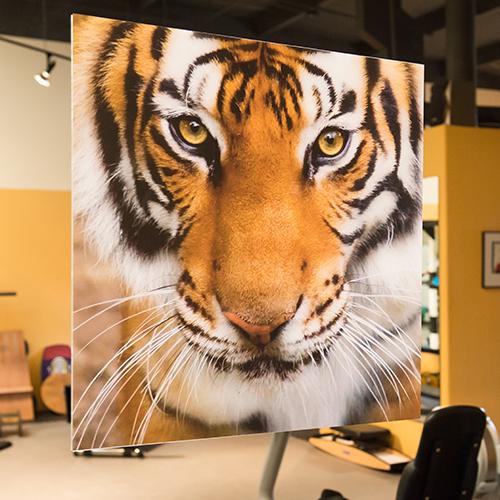 Tigeronglsindoors-1